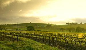 Un grand choix de vins rouges & de vins blanc de Bourgogne